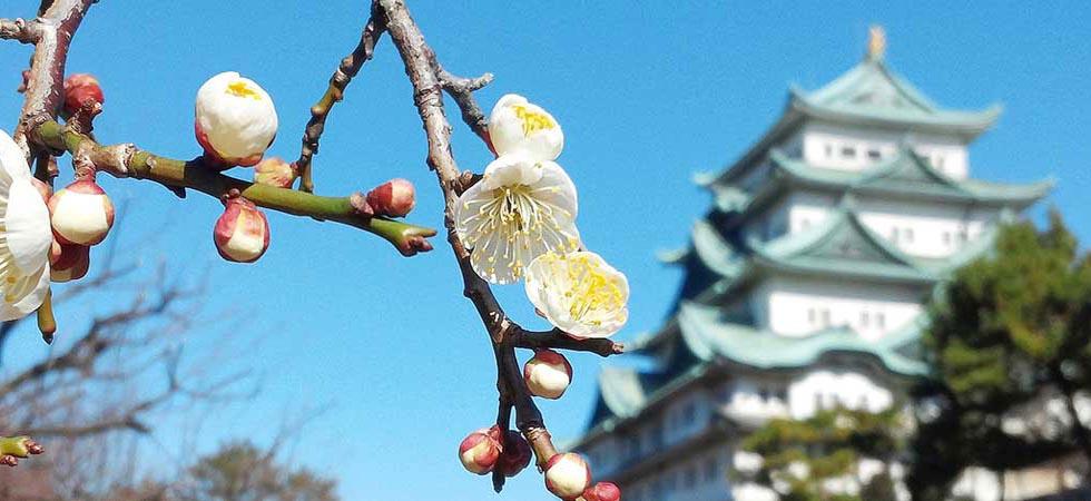 Những điểm du lịch tuyệt đẹp ở Nagoya